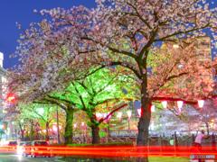 cherry tree at eveningⅢ