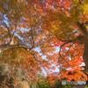 天女洞の紅葉