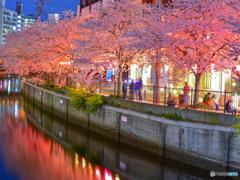cherry tree at eveningⅣ