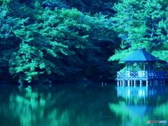 6月の石神井公園03