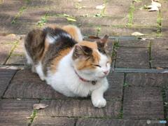 愛宕神社のネコ