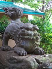 下落合氷川神社の狛犬1