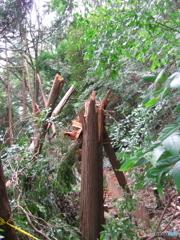 台風の爪痕1