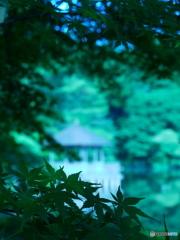 6月の石神井公園01