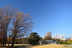 師走の新宿御苑2