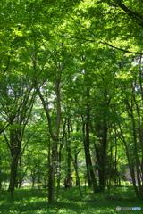 皇居にある雑木林