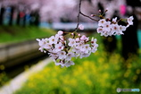 花のある風景 4