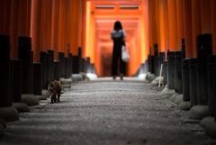 鳥居連なる道を、猫とネコが案内