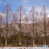 枝向こうの冬山を望む