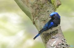 また逢いたい青い鳥