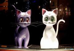 例のネコたち