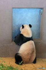 すいません、パンダ1枚。