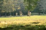 鹿は跳ねる、僕は転ぶ