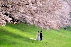 桜の祝福をいっぱいに