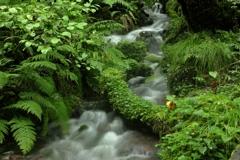 瀞川平の湧水