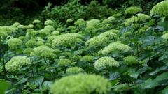 梅雨の花 ~神戸市森林植物園Ⅰ~