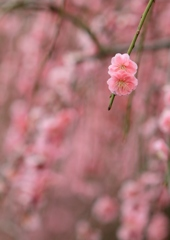 いなべの春