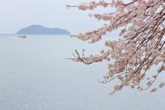 湖北の春 ~海津大崎Ⅲ~