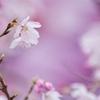 春さんぽⅣ