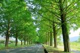 初夏の並木道
