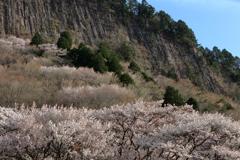 奇峯に咲く桜 ~屏風岩公苑Ⅰ~