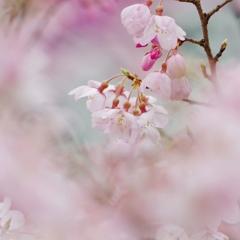 春さんぽⅤ