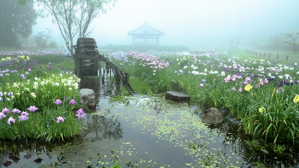 霧に包まれし夢世界 ~永沢寺花しょうぶ園Ⅲ~