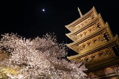 東寺と桜とお月様