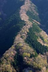 ナメゴ谷の春