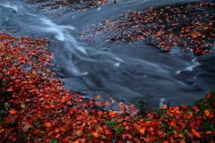 紅渓 ~るり渓の秋Ⅷ~