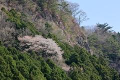 岩壁に咲く ~屏風岩公苑Ⅱ~