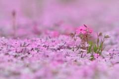花のじゅうたん