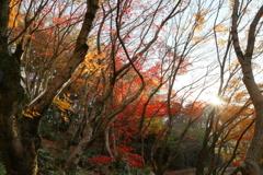 陽は傾き、秋深まる ~私市植物園の秋Ⅰ~
