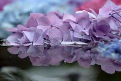 水鏡と紫陽花Ⅰ