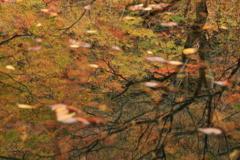 木谷沢渓流の秋Ⅰ
