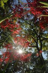 紅い森の中