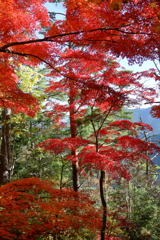 Beautiful JAPANⅠ ~吉野、高城山より~