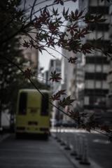 秋 色 ①