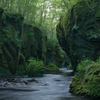 The moss river