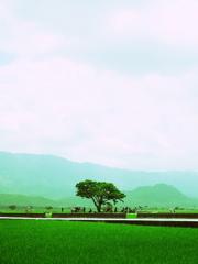 カネシロタケシの木