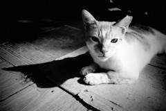 駅前広場の猫