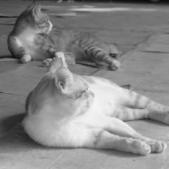 駅前広場にいたネコ