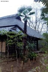 日本家屋と南国植物