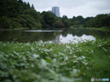 池の周りの草