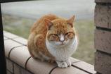 ワイルド猫