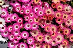 まぶしい花