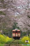桜トンネル28