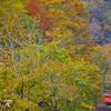 タラコと秋