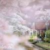 会津に春が来た