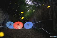 竹小径の彩